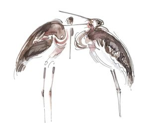 Juvenile Black-necked Storks. (Julia Whatley, 2016)