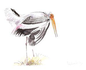 Painted Stork threat display. (Julia Whatley, 2016)