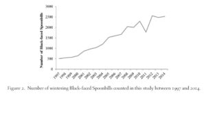 Population trend of Black-faced Spoonbills using synchronized counts at 42 wintering sites. (Figure from paper published in Bird Conservation International.)